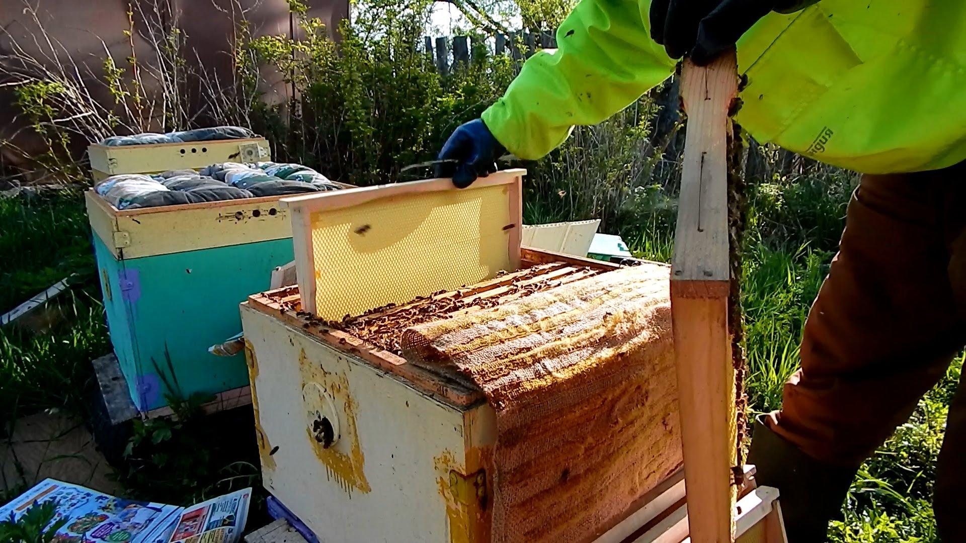 Весенняя обработка и расширение пчелиного гнезда