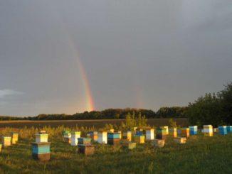 Все продукты пчеловодства крайне полезны для здоровья