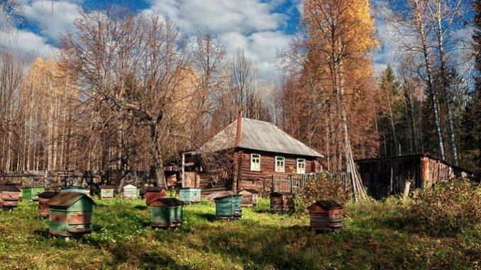 В пчеловодство в марте входит и процесс выставки ульев