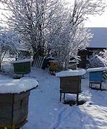 Пчеловодство в марте — важная часть работы на пасеке