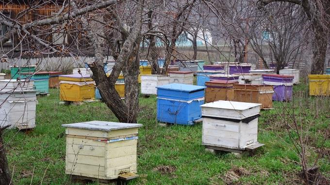 Пчеловодство в марте начинается с подготовки инструментов