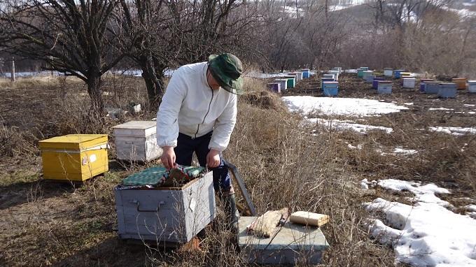 В марте пчеловодство следует вести очень внимательно