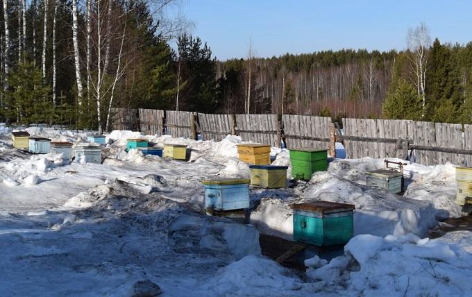 Пчеловодство в марте обеспечивает успех всей компании по сбору меда