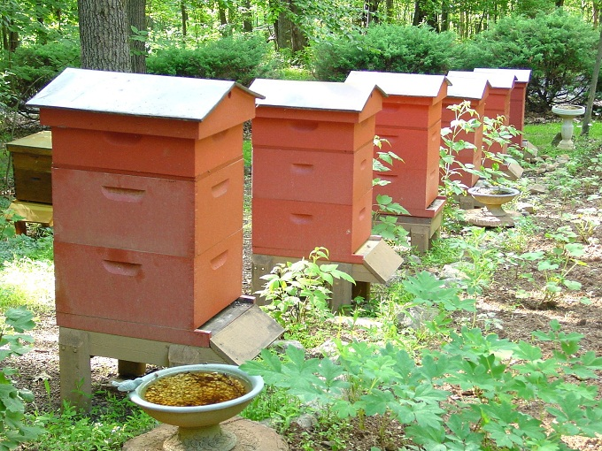 Многоярусный улей на вид имеет подобие кассетного пчеловодства