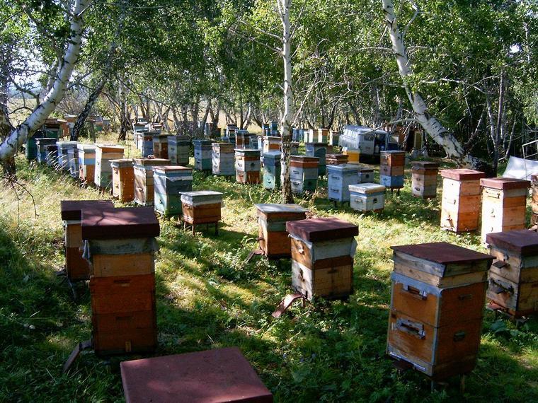 Правильная расстановка ульев в жаркую погоду летом в пчеловодстве