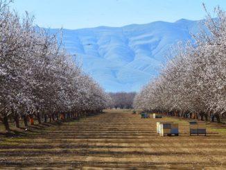 Сушь в пчеловодстве должна устанавливаться в улей только весной