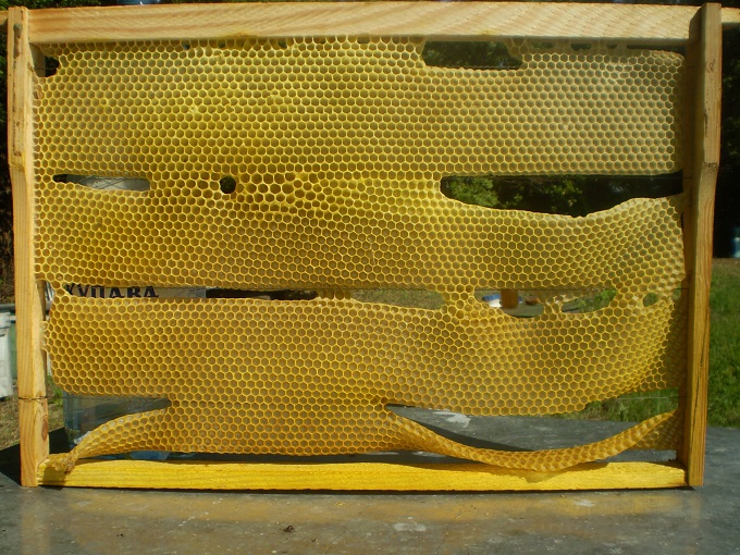 Такие рамки из пчелиного воска не соответствуют необходимым свойствам и идут на перетопку в первую очередь