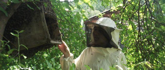 Поимка улетевшего роя в пчеловодстве летом