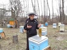 Весенний осмотр пчелиных семей: основные правила