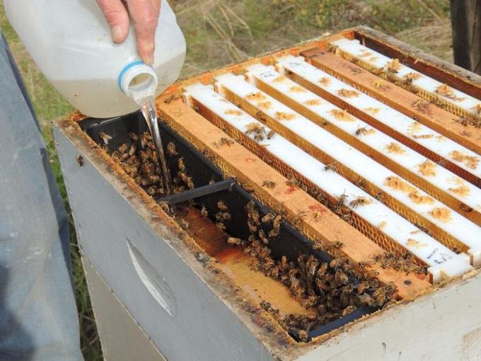 Подкормка для пчел: секреты приготовления