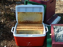 Натуральное пчеловодство для начинающих