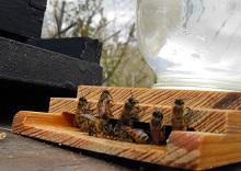 Виды подкормок: основные способы пчелиной диеты