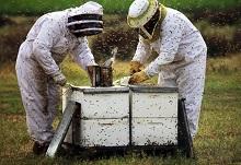 Видео для пчеловодов