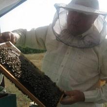 Цена пчелиной семьи варьируется в зависимости от региона