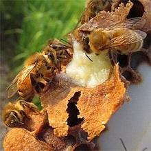 Средняя цена на семейство пчел примерно одинакова везде