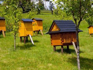 Пчеловодство, как отрасль сельского хозяйства, существует уже очень давно