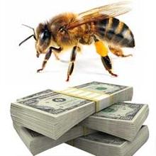 Пчеловодство приносит большой доход и как отрасль сельского хозяйства не слишком сложно для начинающих