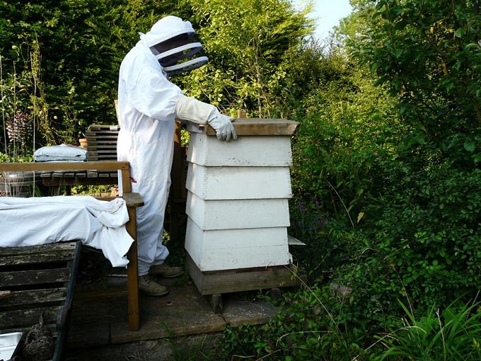 Как и в любом деле, в пчеловодстве в виде отрасли сельского хозяйства, всегда есть определенные риски