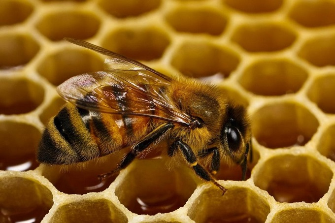 Чем кормить и поить пчел: памятка начинающему пчеловоду