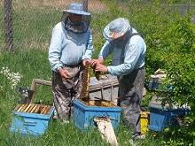 Субсидии в пчеловодстве