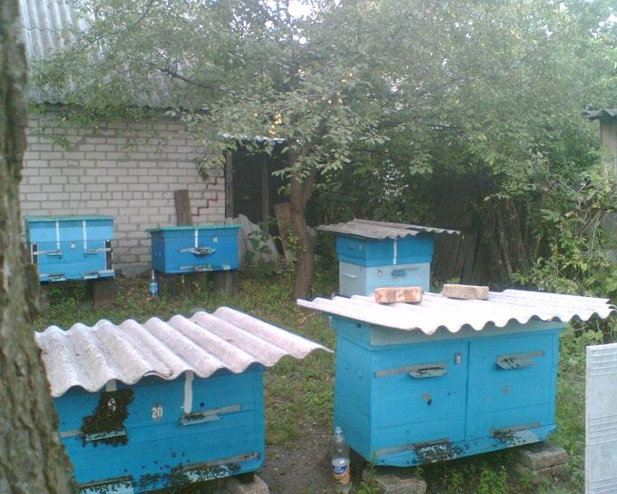 Ульи для пчел из пенополистирола своими руками фото 621