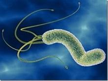 Прополис и бактерия хеликобактер