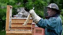 Пчеловодство и нормы права