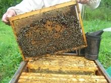 Курсы и семинары по пчеловодству