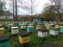 Продажи продукции пчеловодства