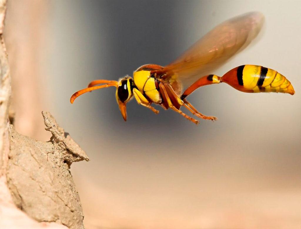 Средства от пчелиных укусов