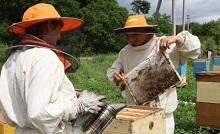 Законодательство о пчеловодстве