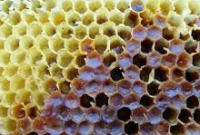 Продажа пчелиной перги