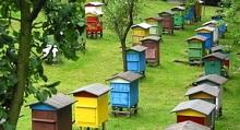 Семинары и курсы по пчеловодству