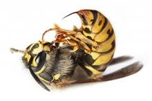 Продажа яда пчелиного