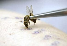 Продажи пчелиного яда