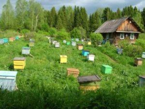 В России вымирают пасеки – пчеловодов