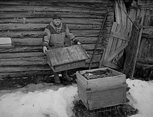 В гостях у потомственного пчеловода Геннадия Зуева