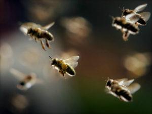 Пчелы могут спасти человечество от голода