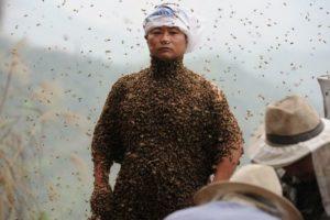 Китай планирует экспортировать Пензенский мед