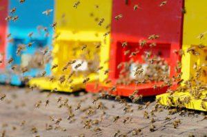Всемирный день пчел отпраздновали в Словении